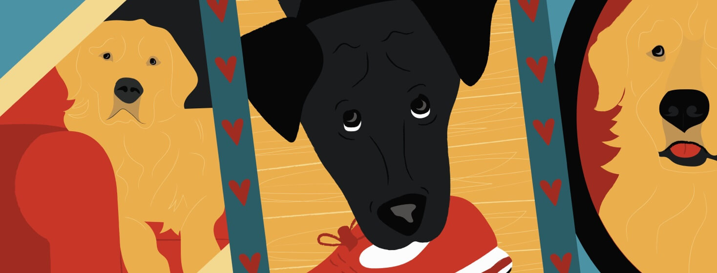 Three portraits of dogs surrounded by hearts with one holding a tennis shoe.